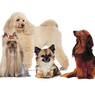 omaggi gratuiti cibo per cani
