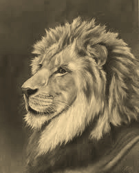 Suranee's Tattoo Blog: Sketches of Lion Tattoos