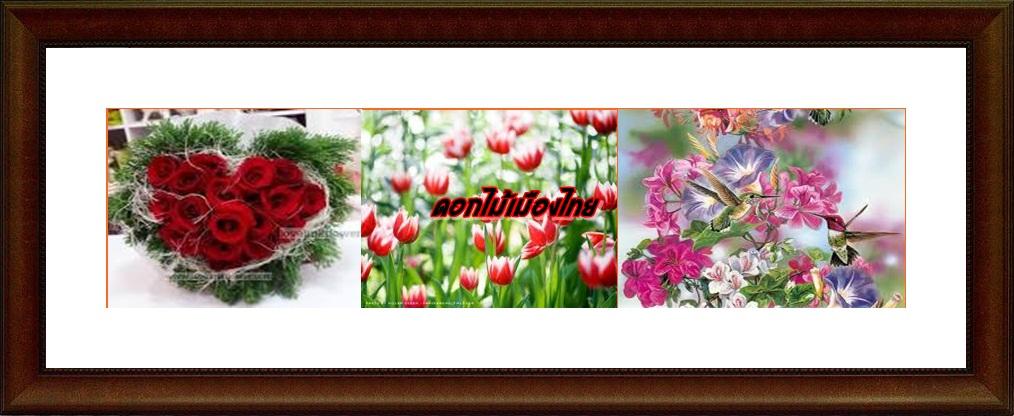 ดอกไม้เมืองไทย