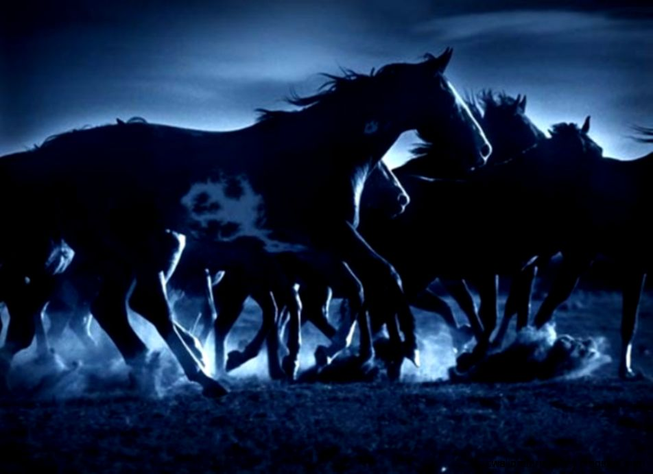 Horses In The Moonlight  Amazing Wallpapers
