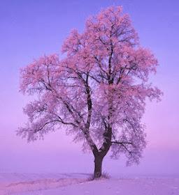 Eflatun Ağaç'ın Köklerinde Yazanlar: Hemen aşağıda...