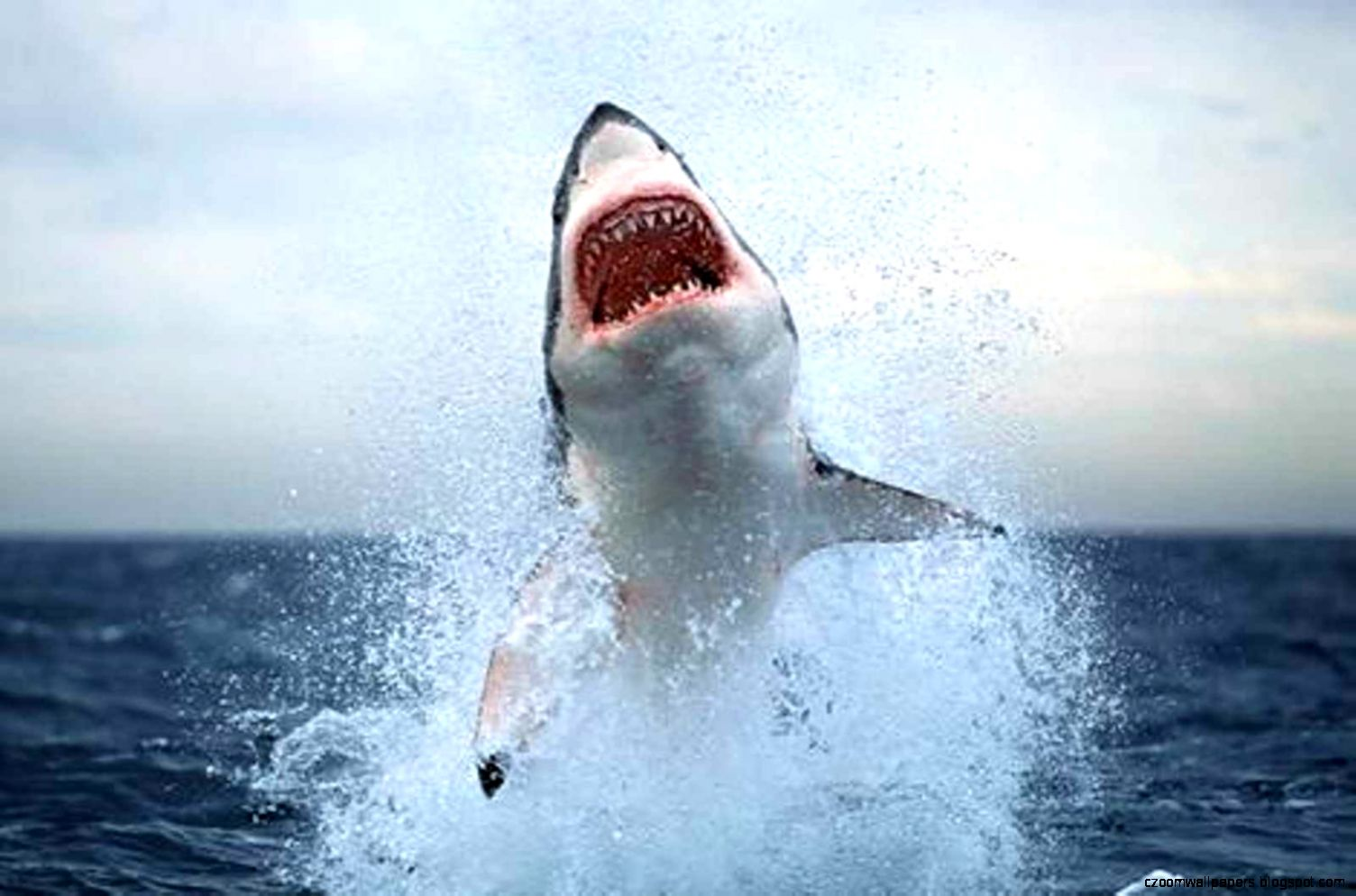 The meaning of the dream in which you saw «Shark»