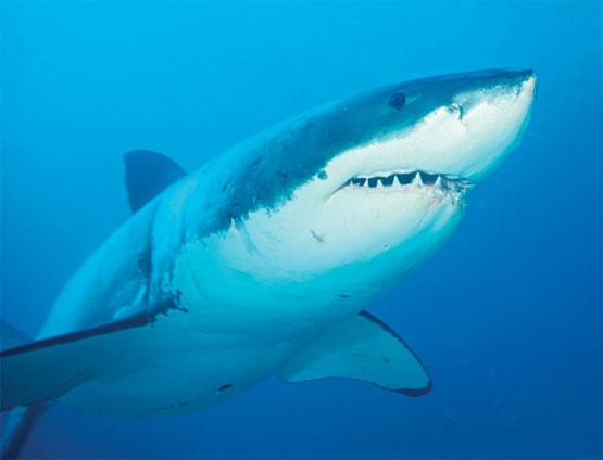 Descubren que los Tiburones tienen Personalidad