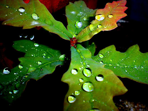 ¡Me encanta que llueva en Galicia!.