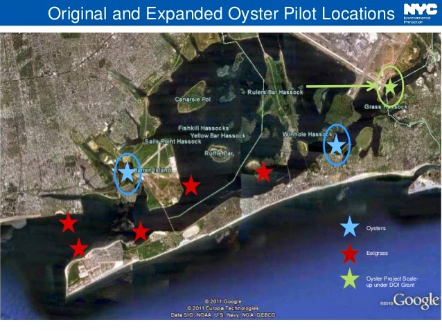 Eel Grass Oyster Restoration Map JFK airport Jamaica Bay New York