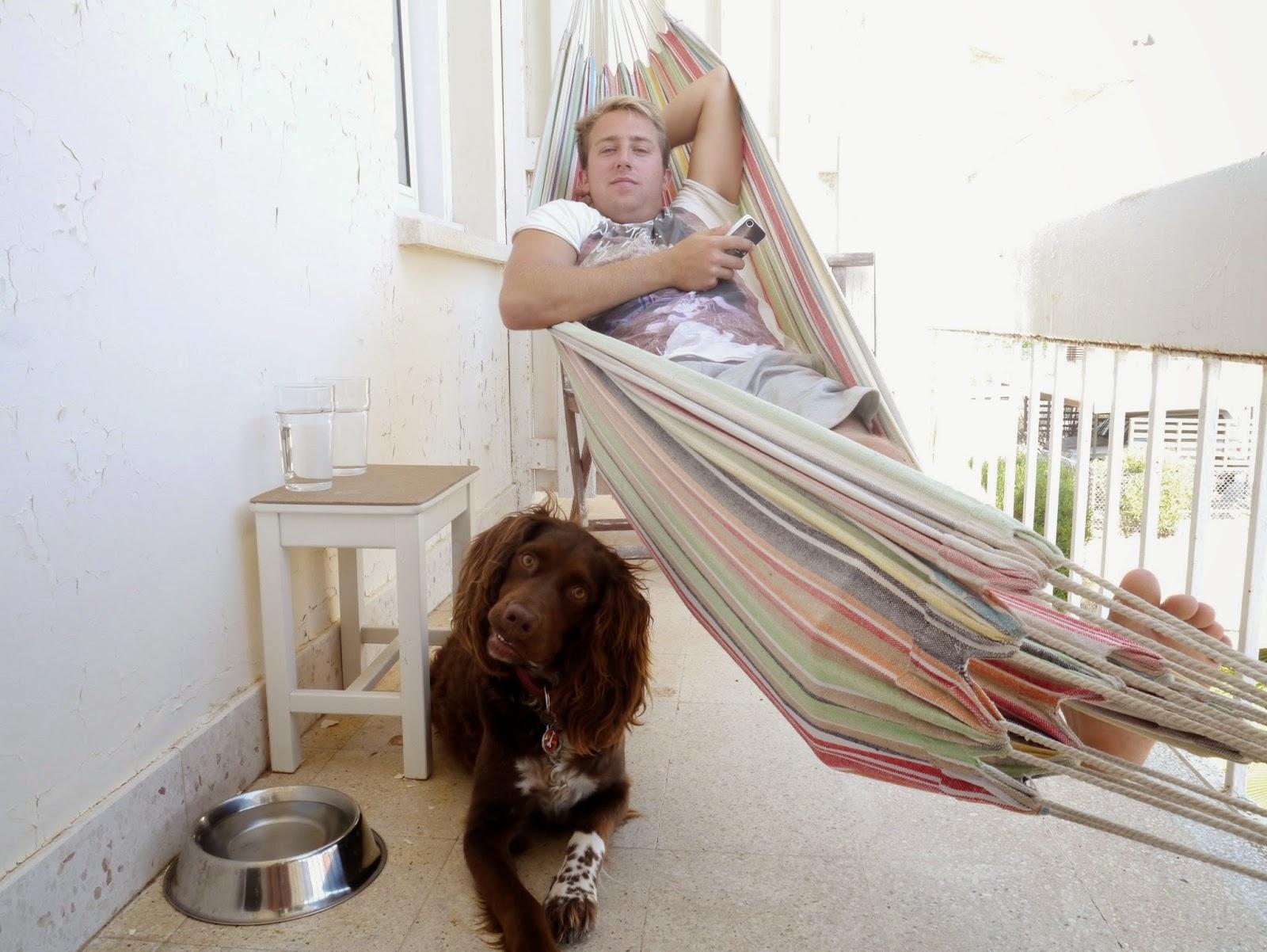 Man in a hammock and springer spaniel dog