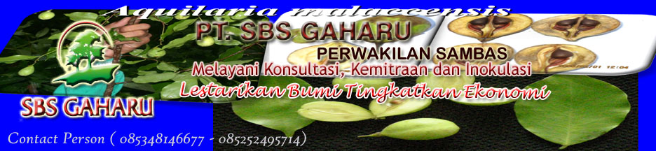 PT. SBS GAHARU PERWAKILAN SAMBAS