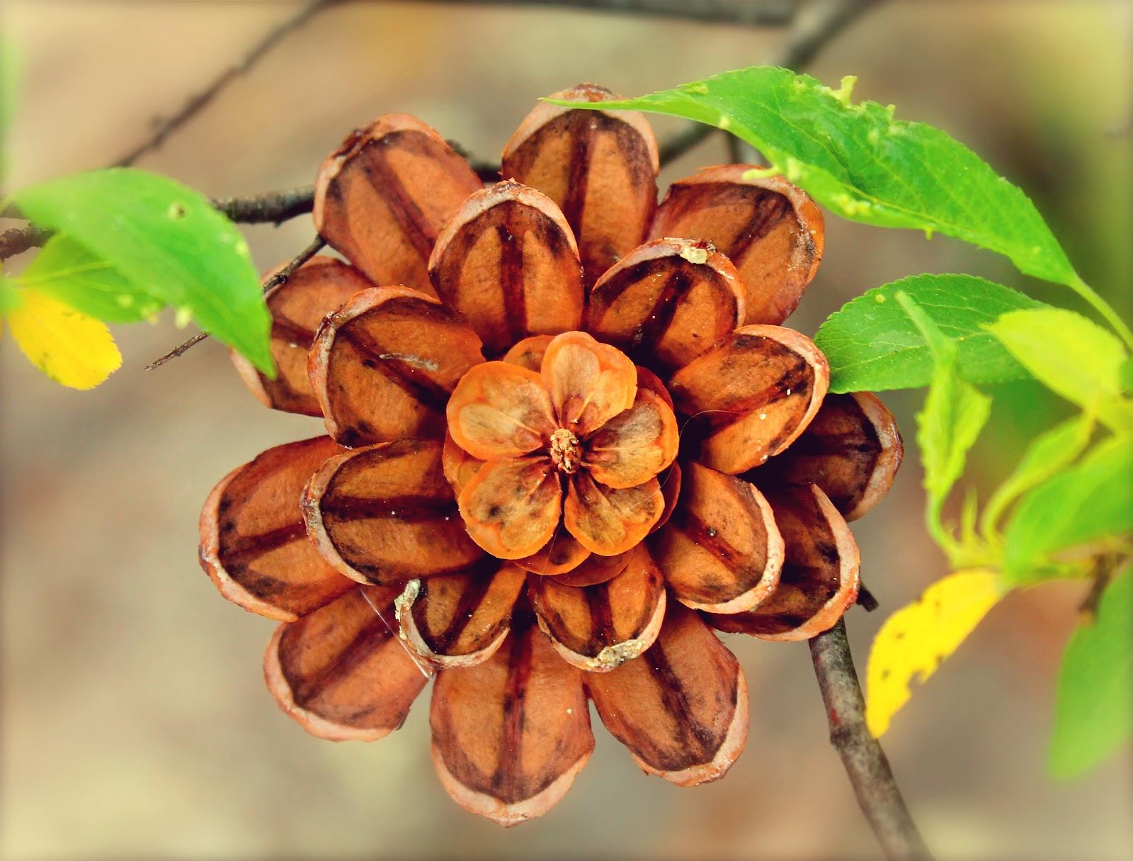 Цветы шишек