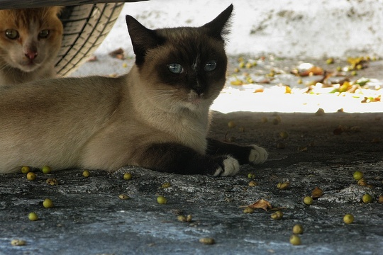 Cats from Acapulco, Mexico