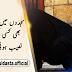 Remarkable Urdu Quotes - Specific Backgrounds (Part-5)