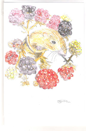 Harvest mouse pic