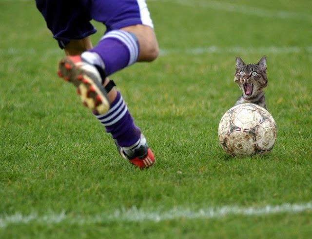 صور مضحكة لقط خائف من الكرة