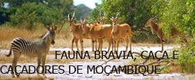 FAUNA BRAVIA, CAÇA E CAÇADORES DE MOÇAMBIQUE