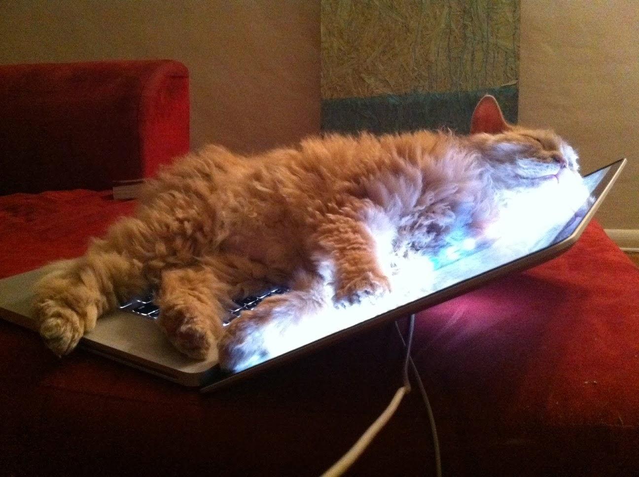 gatto-matto