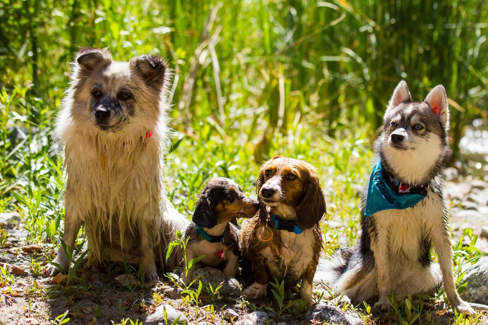 Image Result For Dog Training Denver