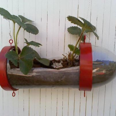 Giocabosco creare con gnomi e fate riciclare bottiglie for Vasi per fragole