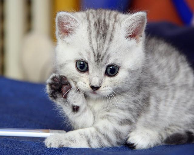 """Résultat de recherche d'images pour """"image de chat mignon"""""""