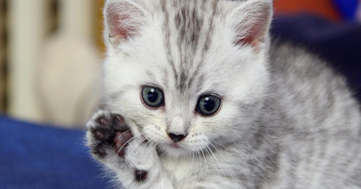 Images d chaton mignon photo de chat - Photo chat mignon ...
