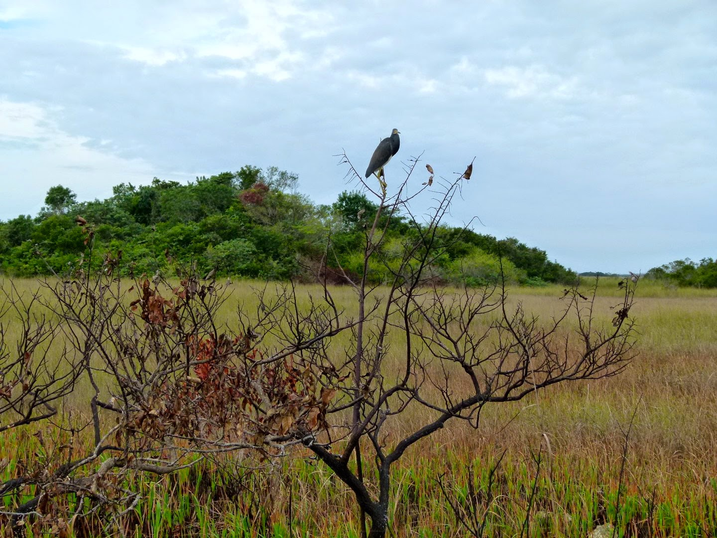 Birds in Shark Valley, Everglades National Park