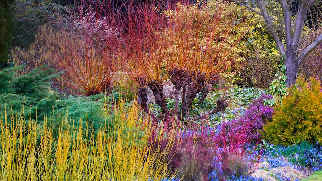 Cambridge University Botanic Garden, Cambridge, England (© Harpur Garden Library/Corbis) 582