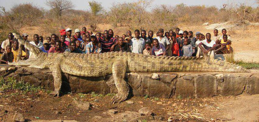 20 metre boyundaki timsah ve yerliler kapak resimleri