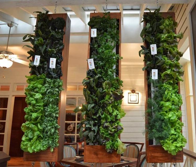 Indoor Vertical Hydroponic Gardens Inside Renaissance Orlando
