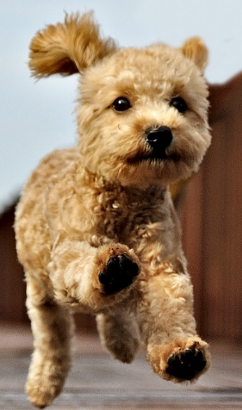 Bạn mơ thấy chó và tìm hiểu chó là số bao nhiêu?