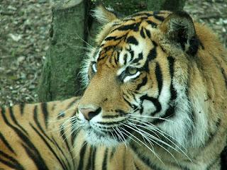 ملف كامل عن اجمل واروع الصور للحيوانات  المفترسة   حيوانات الغابة  327942590_97961bf942