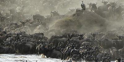 Barack Obama safari, Obama trail in Kenya, Obama heritage, Kogelo, Holiday in Kenya, Safari in Kenya, African wild, Mount Kenya, The Great Rift Valley, Amboseli National Park, Masai Mara Game Reser