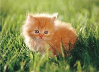 fluffy cute kitty