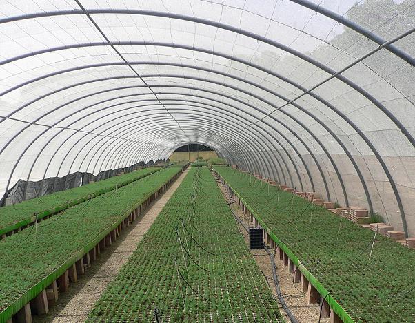 Vivero de ejea de los caballeros secci n sindical de csi for Proyecto productivo de vivero forestal