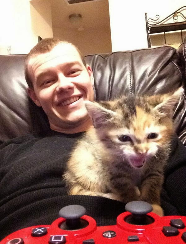 Funny cats - part 103 (40 pics + 10 gifs), cat photos, funny cat pictures, cute cat