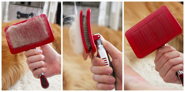 Grooming your dog at home with CHI for Dogs Self Cleaning and Pivoting Slicker Brush
