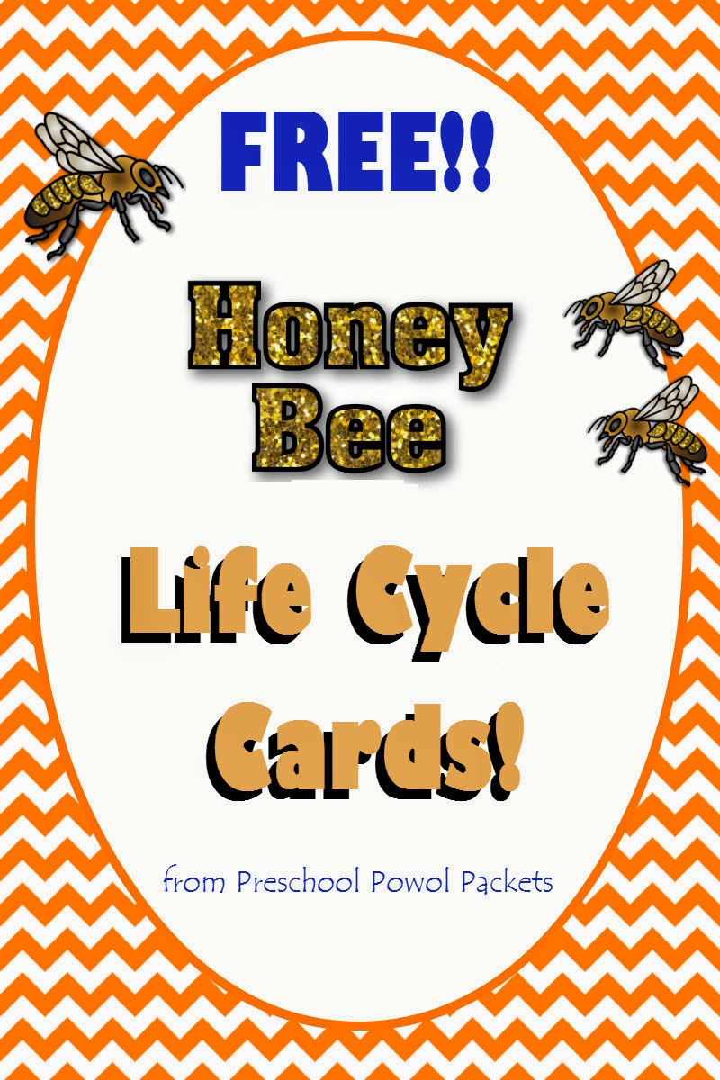 FREE} Honey Bee Life Cycle Cards! | Preschool Powol Packets