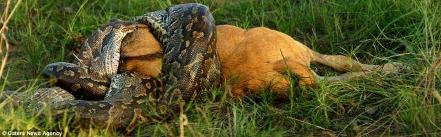 ular 30 meter