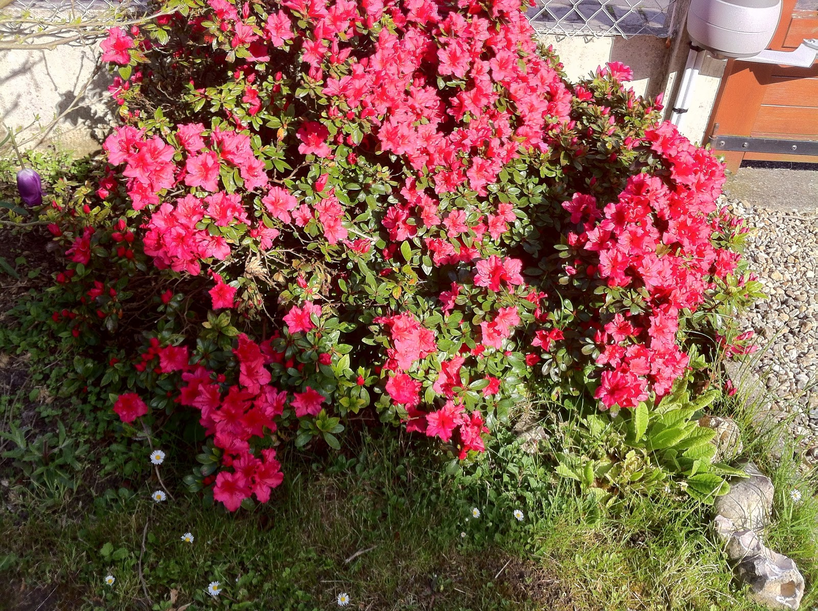 Mon jardin imparfait for Le jardin imparfait