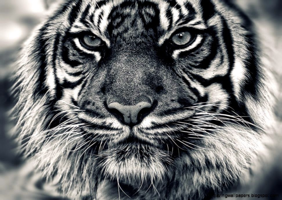 FunMozar – The White Tiger