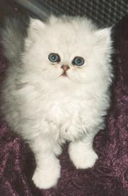 Meong! Jenis - Jenis Kucing ~ My Name Is Nuri