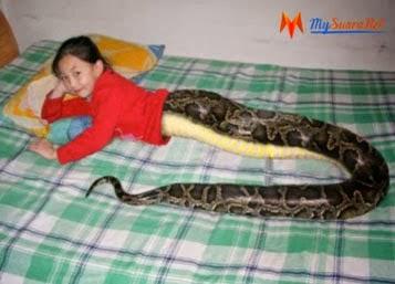 budak berbadan ular