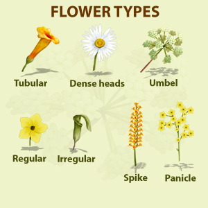 Types of yellow flowers names dagliljeslktet wikipedia types of yellow flowers names download mightylinksfo