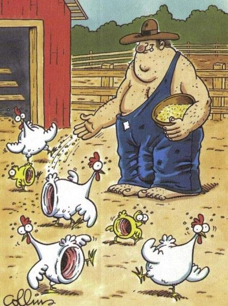 Fazendeiro arrombou as galinhas