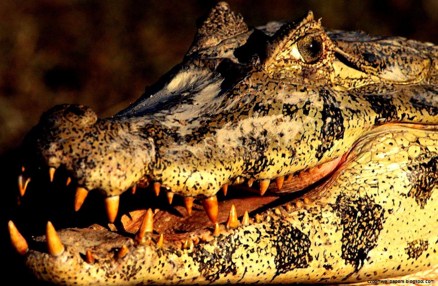 Crocodile Desktop Wallpapers   New WallpapersNew Wallpapers