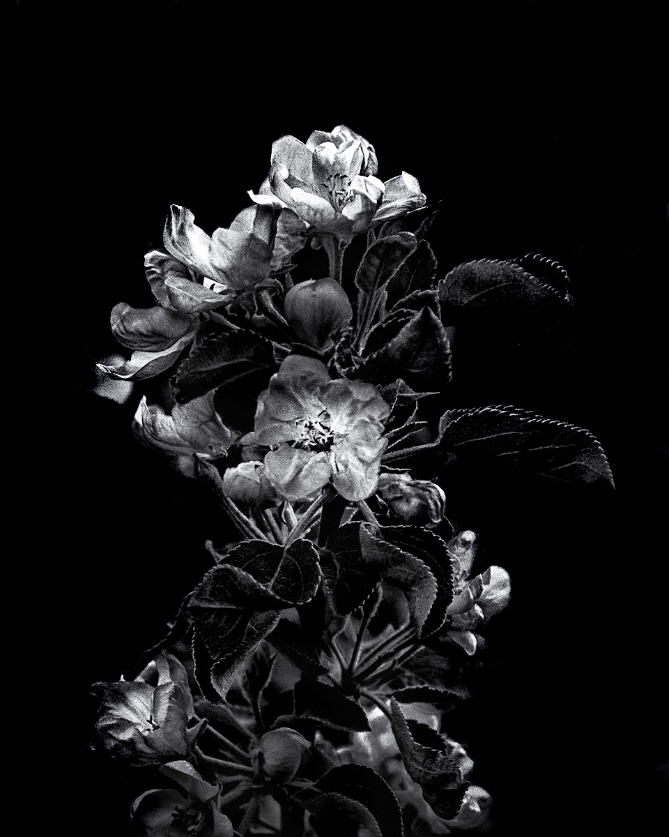 Backyard Flowers In Black And White 4