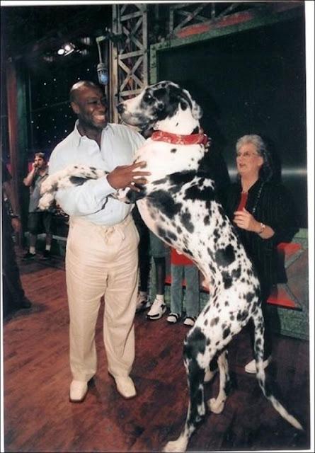 Giantdogs+%25284%2529  Σκυλιά… γίγαντες (photos)