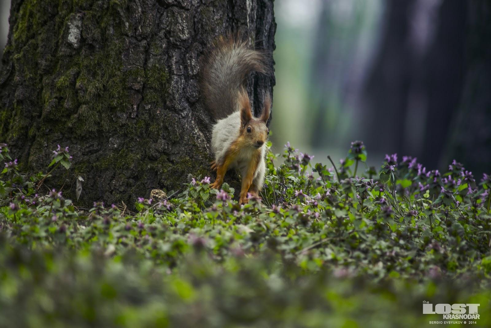 Краснодар Squirrel