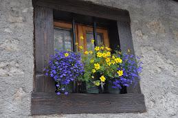 Una finestra sulla vita