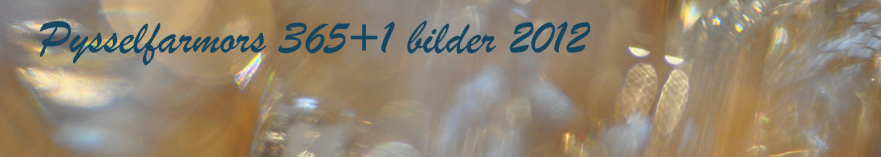 Pysselfarmors 365 + 1 bilder 2012