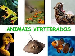 http://centros.edu.xunta.es/cuntiscpi/vertebrados/vertebrados.html