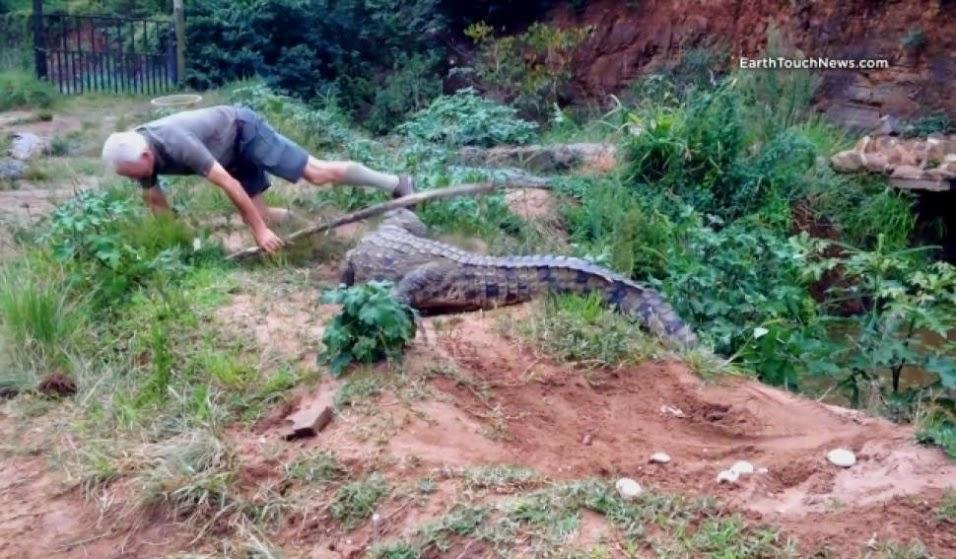 Homem de 73 anos é atacado por crocodilo furioso