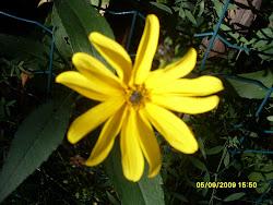 Välitämme myös perinteisiä puutarhakasveja ja taimia